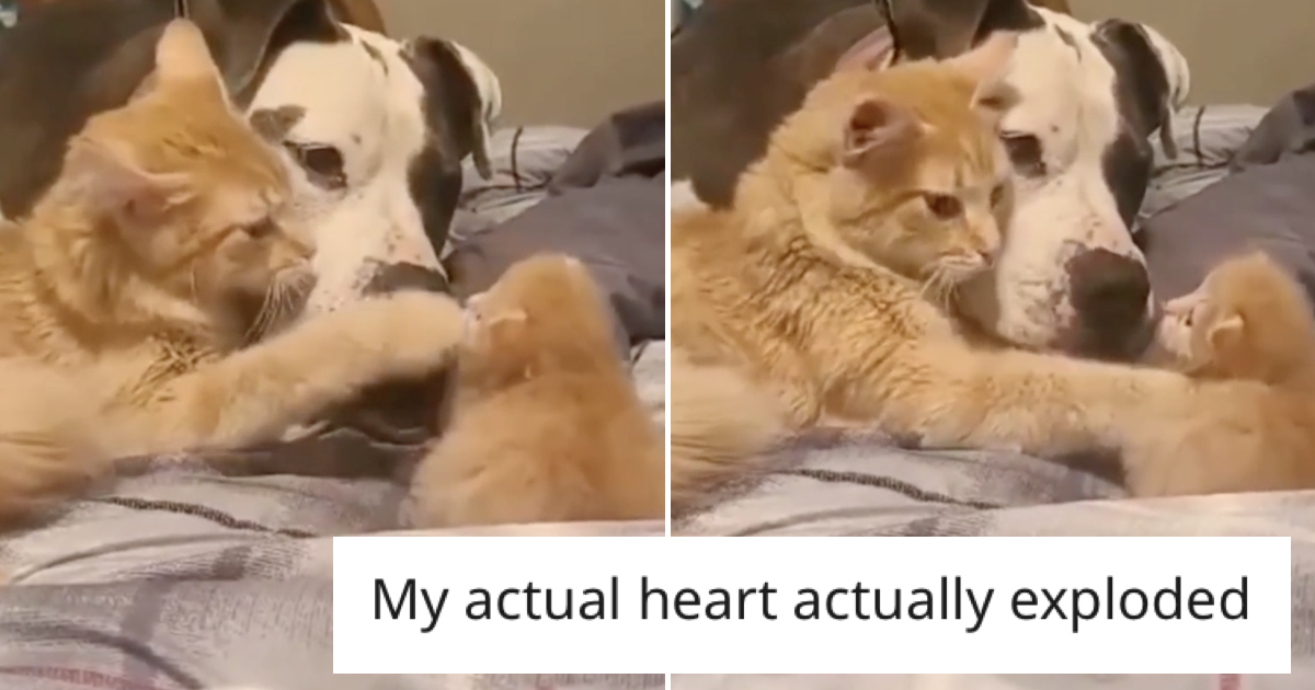 'Mummy cat introduces new kitten to doggy friend'