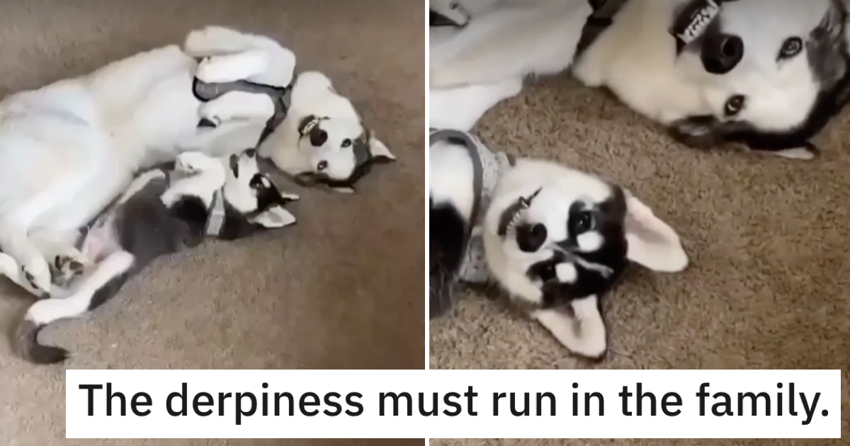 These dogs share the same 'derpy' smile and it wins 'aww!' of the day