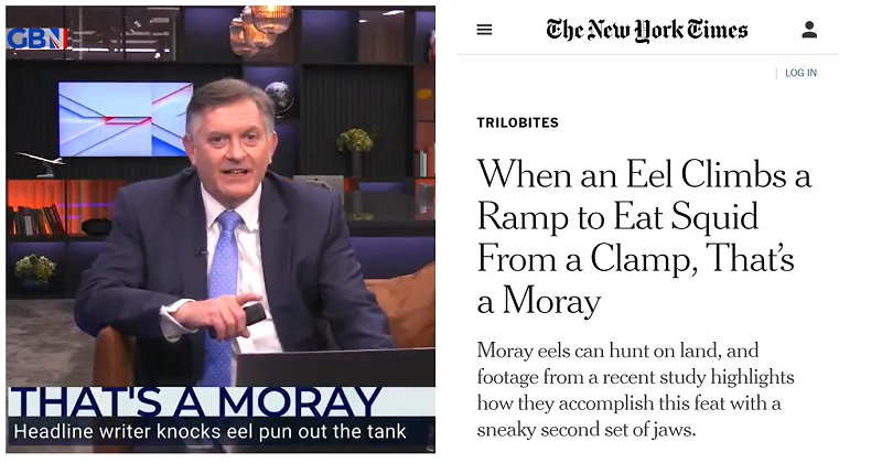 Simon McCoy nailed his performance of the unofficial Headline of the Year