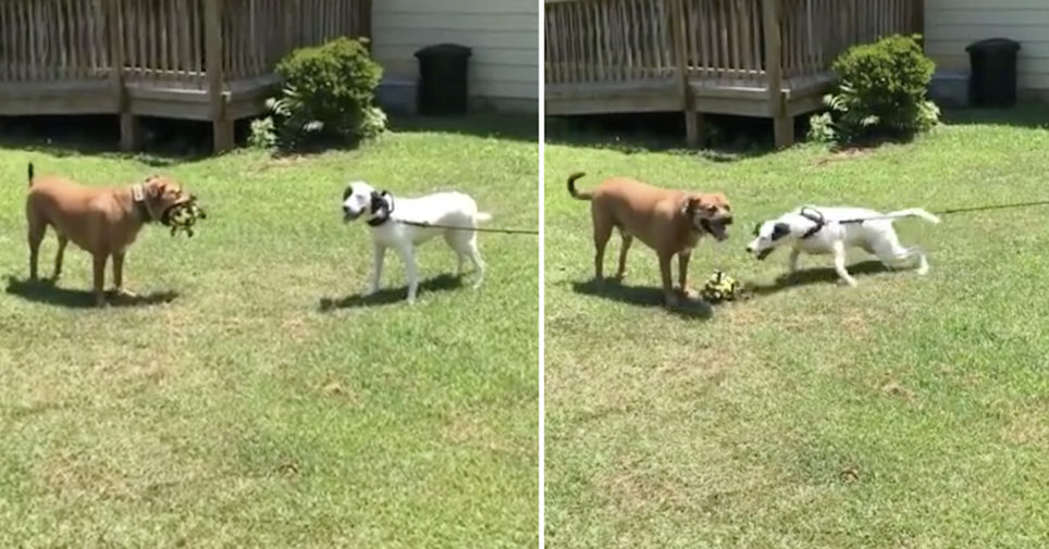 This super smart dog's next level trolling is simply hilarious