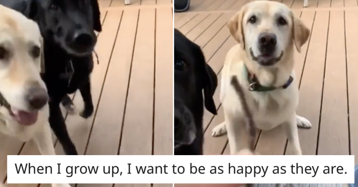 These dogs are so hilariously proud of this tiny stick it went wildly viral