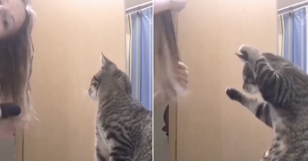A copycat mimicked its owner brushing her hair and it's today's cutest thing - the poke