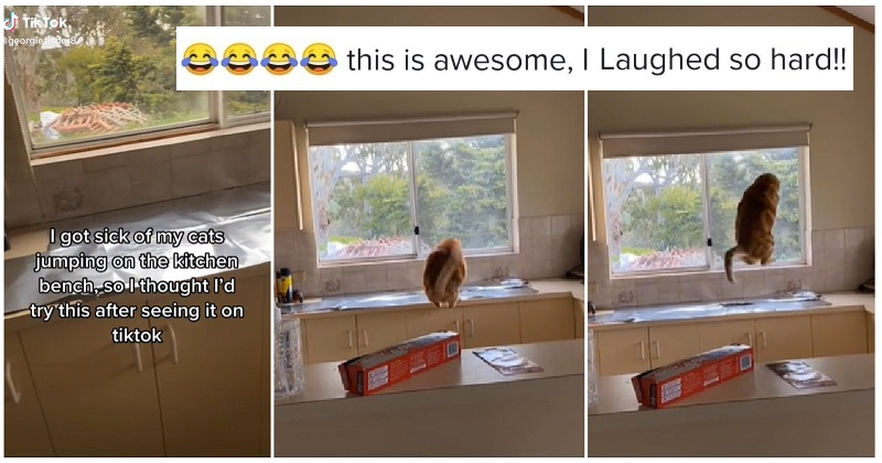How to keep a cat off a counter – with comedy side-effects - the poke