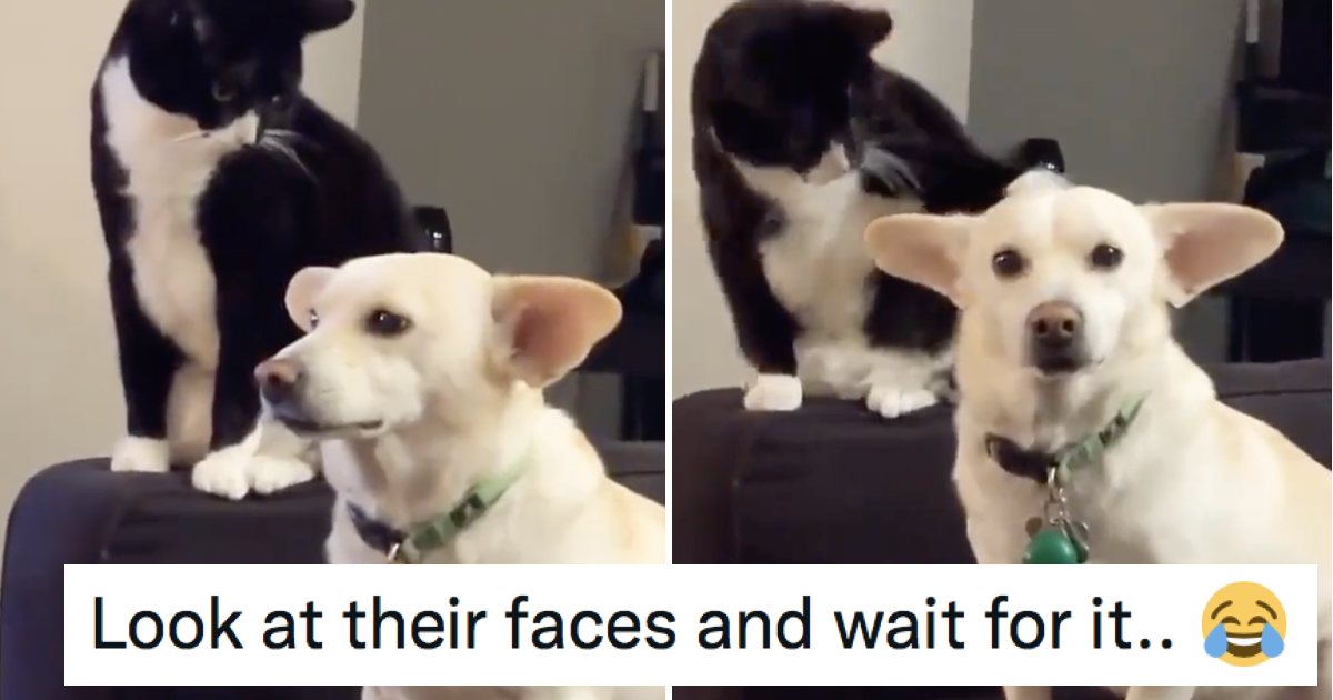 This cat thinking long and hard before hitting the dog is simply magnificent - the poke