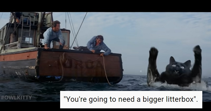 This version of Jaws swaps the shark for a cat – and it works purrfectly