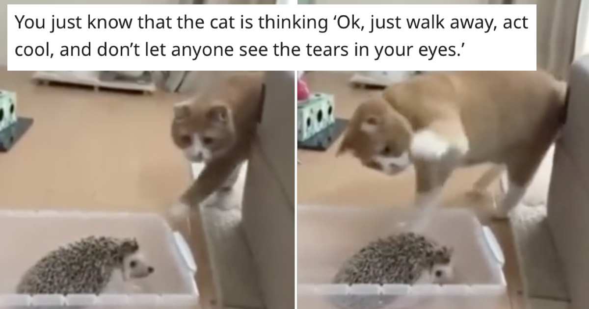 This cat's hilarious response to patting a hedgehog is a lesson learned the hard way