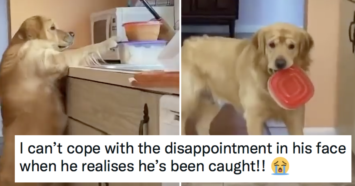 The look on the face of this dog caught in the act is hilarious and totally adorable - the poke