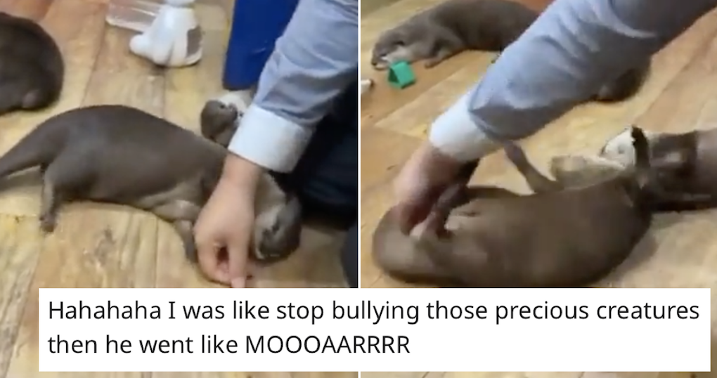 These 'otters begging for spins' are just the soothing balm we needed right now - the poke