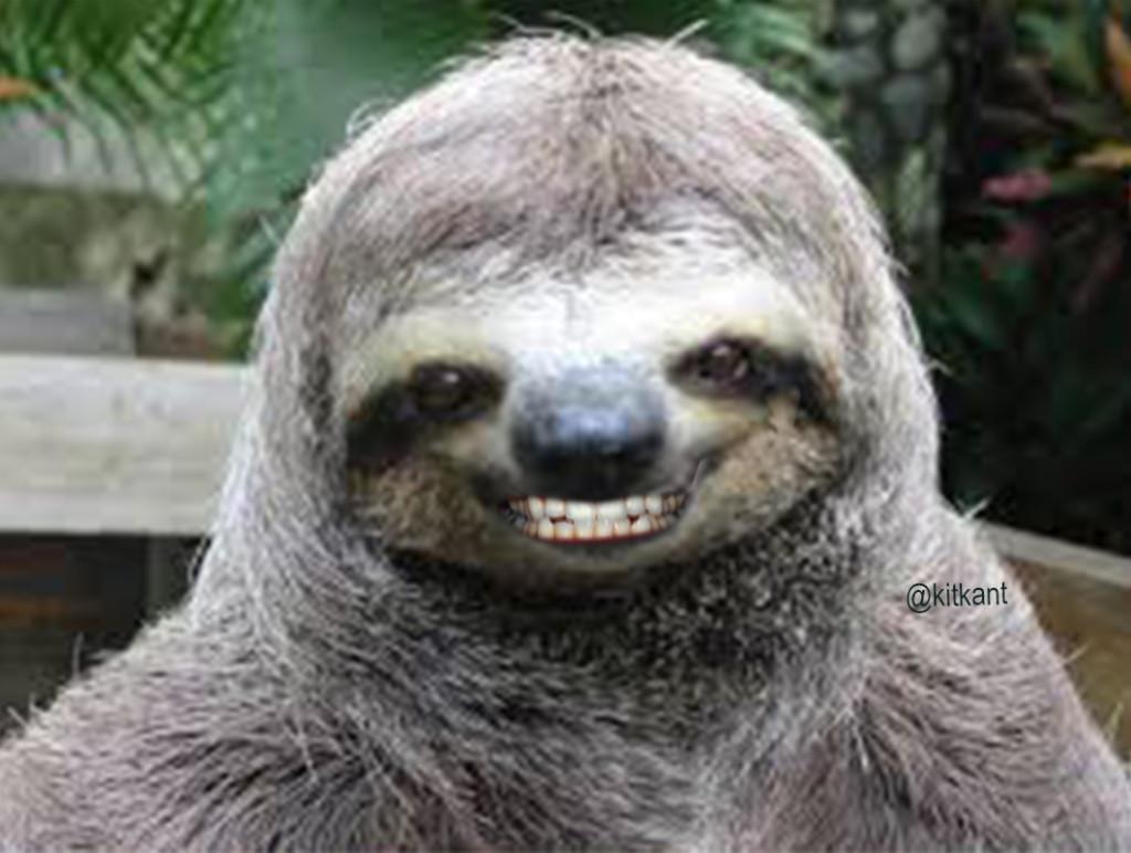 Whisper Sloth Meme Generator  Imgflip